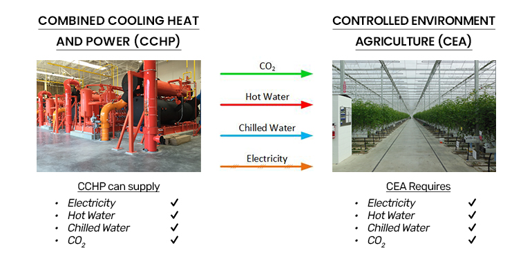 CHP and Controlled Environment Agriculture